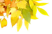Bright autumn leafs isolated on white — Stock Photo