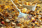 Cleaning of autumn leaves in park — Stockfoto