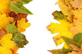 Frame from autumn leaves isolated on white — Stock Photo