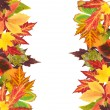 Frame of beautiful colored autumn leaves isolated on white — Stock Photo
