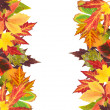 Frame of beautiful colored autumn leaves isolated on white — Stock Photo #36224451
