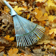 Cleaning of autumn leaves in park — Stock Photo #36234961