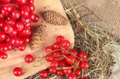 Red berries of viburnum on stand with hay and bumps on wooden background — Foto Stock