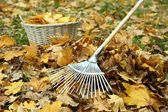 Cleaning of autumn leaves on a green lawn — Stock Photo