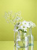 Plantes dans divers contenants en verre sur fond vert — Photo
