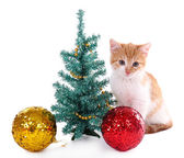 Küçük kedi üzerinde beyaz izole noel süslemeleri ile — Stok fotoğraf