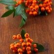 Pyracantha Firethorn orange berries with green leaves, on wooden background — Stock Photo