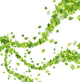 Collection of green leaves isolated on white — Stock Photo