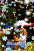Cute cat lying on carpet with Christmas decor — Stock Photo
