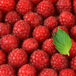 Ripe sweet raspberries, close up — Stock Photo