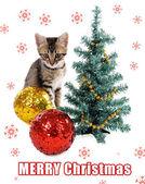 Kleines Kätzchen mit Weihnachtsschmuck isoliert auf weiss — Stockfoto