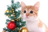 Gattino con decorazioni natalizie isolato su bianco — Foto Stock