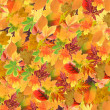 Beautiful colored autumn leaves background — Stock Photo