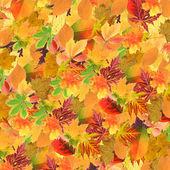 Красивые разноцветные осенние листья фон — Стоковое фото
