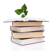 Books with plant isolated on white — Stok fotoğraf