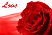 美しいバラと白で隔離され、色のファブリック — ストック写真
