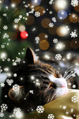 Söt katt liggande på matta med jul inredning — Stockfoto