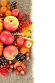 Bela composição de outono, isolada no branco — Fotografia Stock