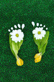 Footprints of leaves and flowers on grass close-up — Stock Photo