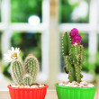Cactuses in flowerpots with flowers, on wooden windowsill — Stock Photo