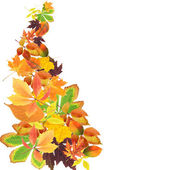 Beautiful colored autumn leaves isolated on white — Foto de Stock