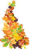 Krásné barevné podzimní listí izolovaných na bílém — 图库照片