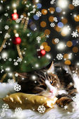 Cute cat lying on carpet with Christmas decor — Foto de Stock