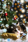Cute cat lying on carpet with Christmas decor — Foto Stock