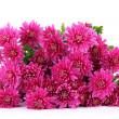 Bouquet of pink autumn chrysanthemum isolated on white — Foto Stock