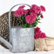 Bouquet of pink chrysanthemum in watering can on white wooden background — Foto Stock