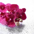 Beautiful orchids with drops — Stock Photo