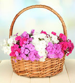 Beautiful bouquet of phlox in wicker basket on table on light background — Stock Photo