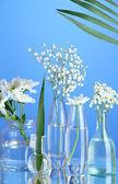 Plantes dans divers contenants en verre sur fond bleu — Photo
