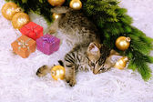 Little kitten with Christmas decorations on carpet — Foto de Stock