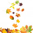Falling beautiful autumn leaves isolated on white — Stock Photo #36856267