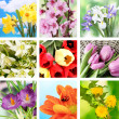 Spring flowers collage — Stock Photo