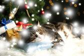 クリスマスの装飾とカーペットに横たわってかわいい猫 — ストック写真