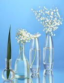 Plants in various glass containers on blue background — Foto Stock