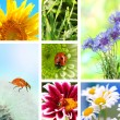 Collage of beautiful nature — Stock Photo