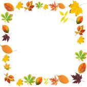 框架的孤立的白色衬底上的漂亮彩色秋叶之静美 — 图库照片