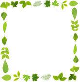 绿色的叶子上白色孤立的框架 — 图库照片