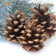 Beautiful pine cones isolated on white — Stok fotoğraf