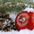 Red apple with fir branches and bumps in snow close up — Foto Stock #37014489