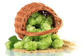 Fresh green hops in wicker basket and barley, isolated on white — Stock Photo