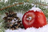 Red apple with fir branches and bumps in snow close up — Stock Photo