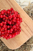 Red berries of viburnum on stand with hay on wooden background — Stock Photo