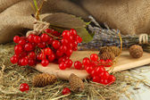 Red berries of viburnum on stand with hay and bumps on table on sackcloth background — Foto Stock