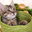 Little kitten with Christmas decorations on carpet — Stock Photo