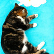 Funny cute cat on blue background — ストック写真