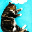 Funny cute cat on blue background — Zdjęcie stockowe